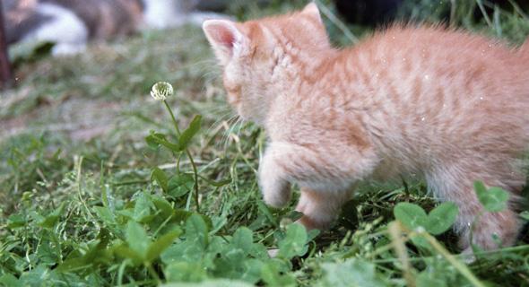 Katzenbaby_draußen