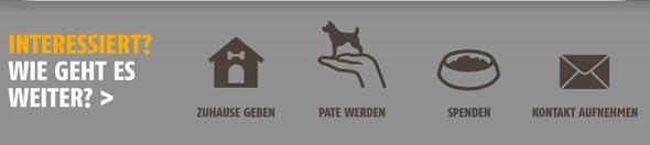 Tierheimhelden_Fußbereich