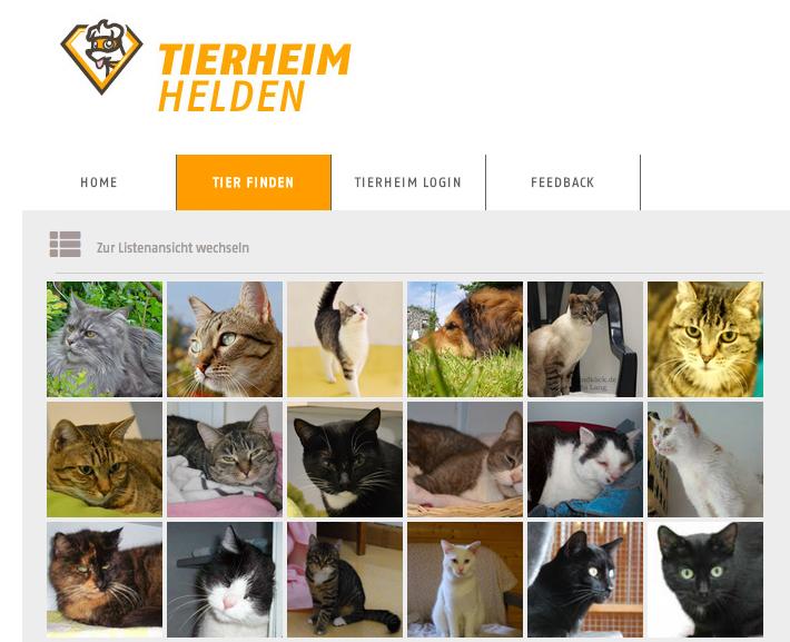 Tierheimhelden_Katzen