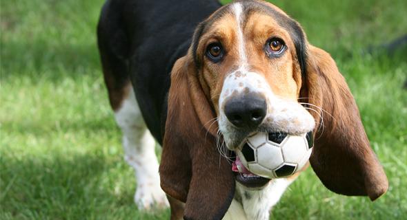 Ballspiele für Hunde