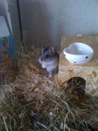 Hamster_Lilli