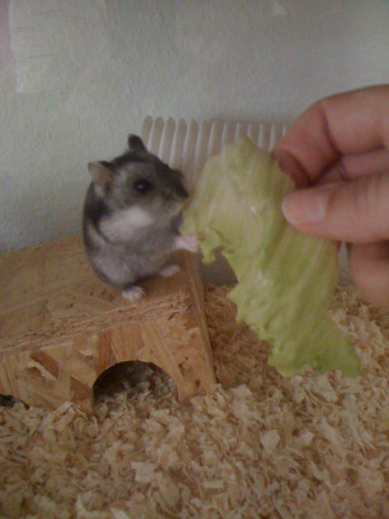 Lilli-beim-Salat-essen