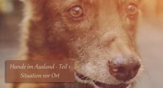 Hunde im Ausland Teil 1