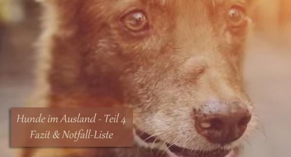 Hunde im Ausland Teil 4