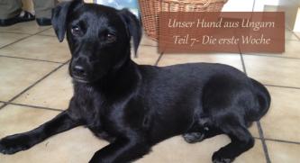Unser Hund aus Ungarn - Teil 7 - Die erste Woche