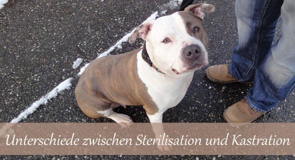 Kastration und Sterilisation