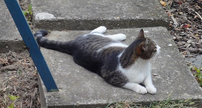 Katze-liegend