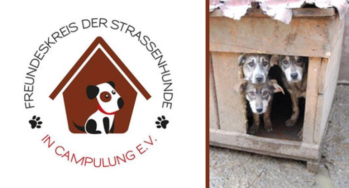 Freundeskreis der Straßenhunde Campulung
