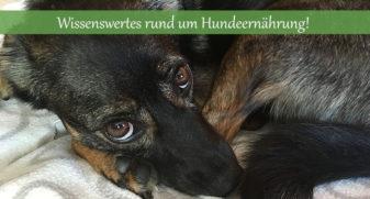 Hundeernaehrung